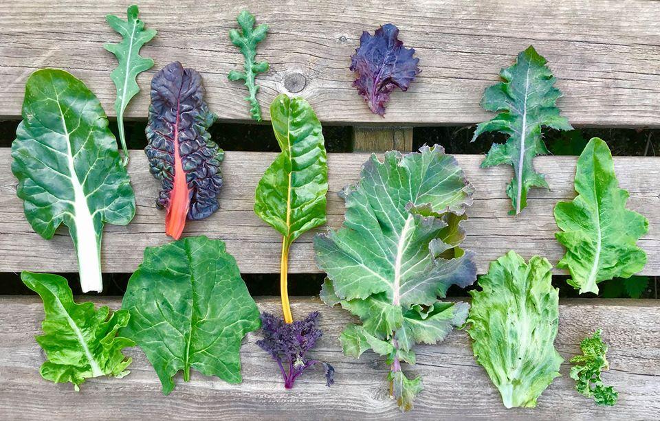 Tamara Șchopu despre diverse frunze de salată și cum se consumă